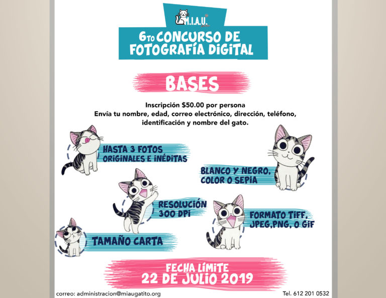 Concurso de Fotografía Digital de Gatos