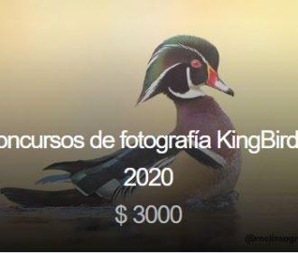 Concursos de fotografía KingBirder 2020