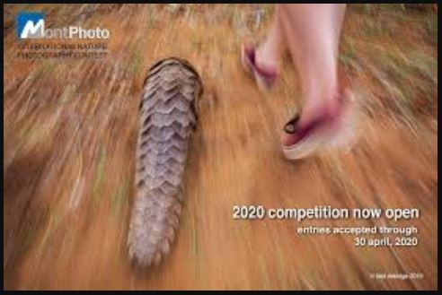 Concurso Internacional de Fotografía de Naturaleza MontPhoto 2020