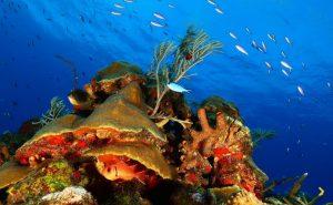 Concurso-Concurso Internacional de Fotografía Subacuática 2020