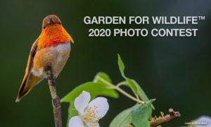 Concurso Fotográfico Garden for Wildlife 2020